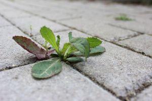 sidewalk_09