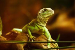 07_lizard