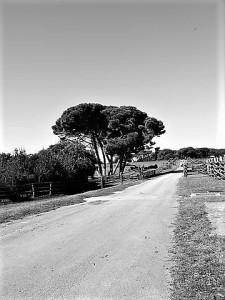 road-326705__480
