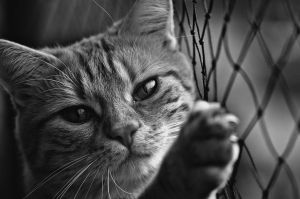 cat-1790093__480